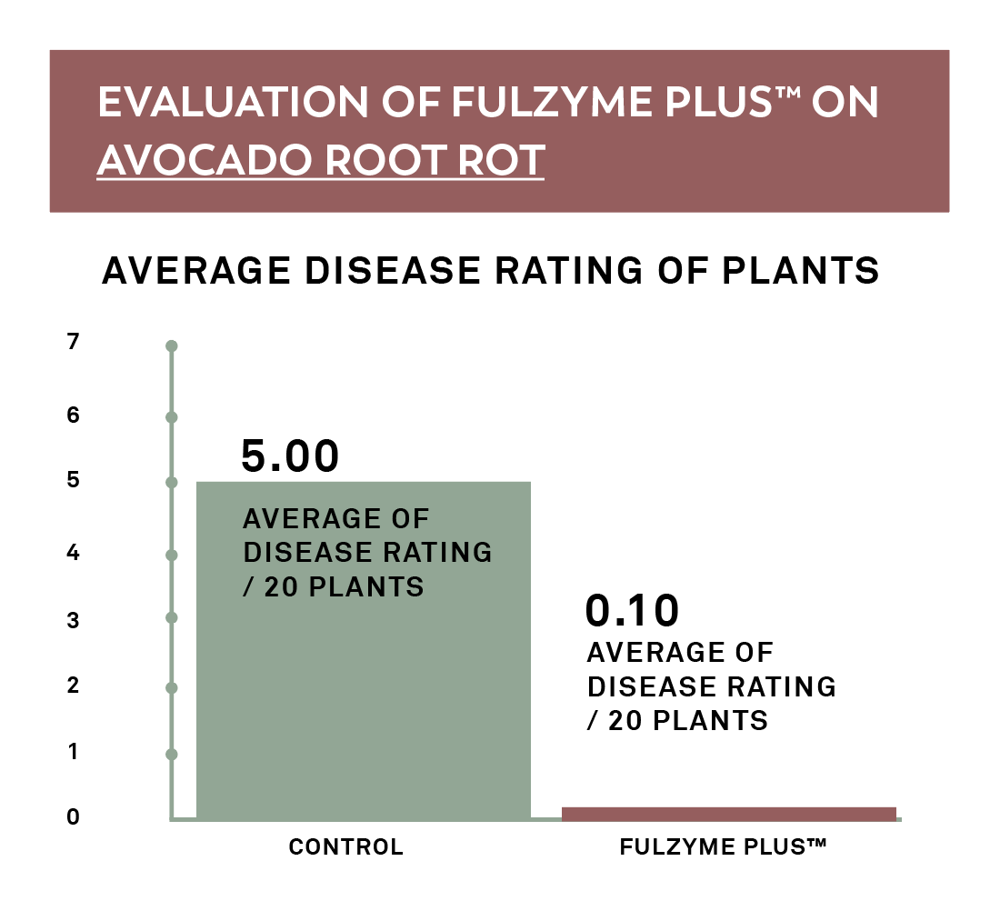 Avocado root rot significantly decreased with Fulzyme Plus
