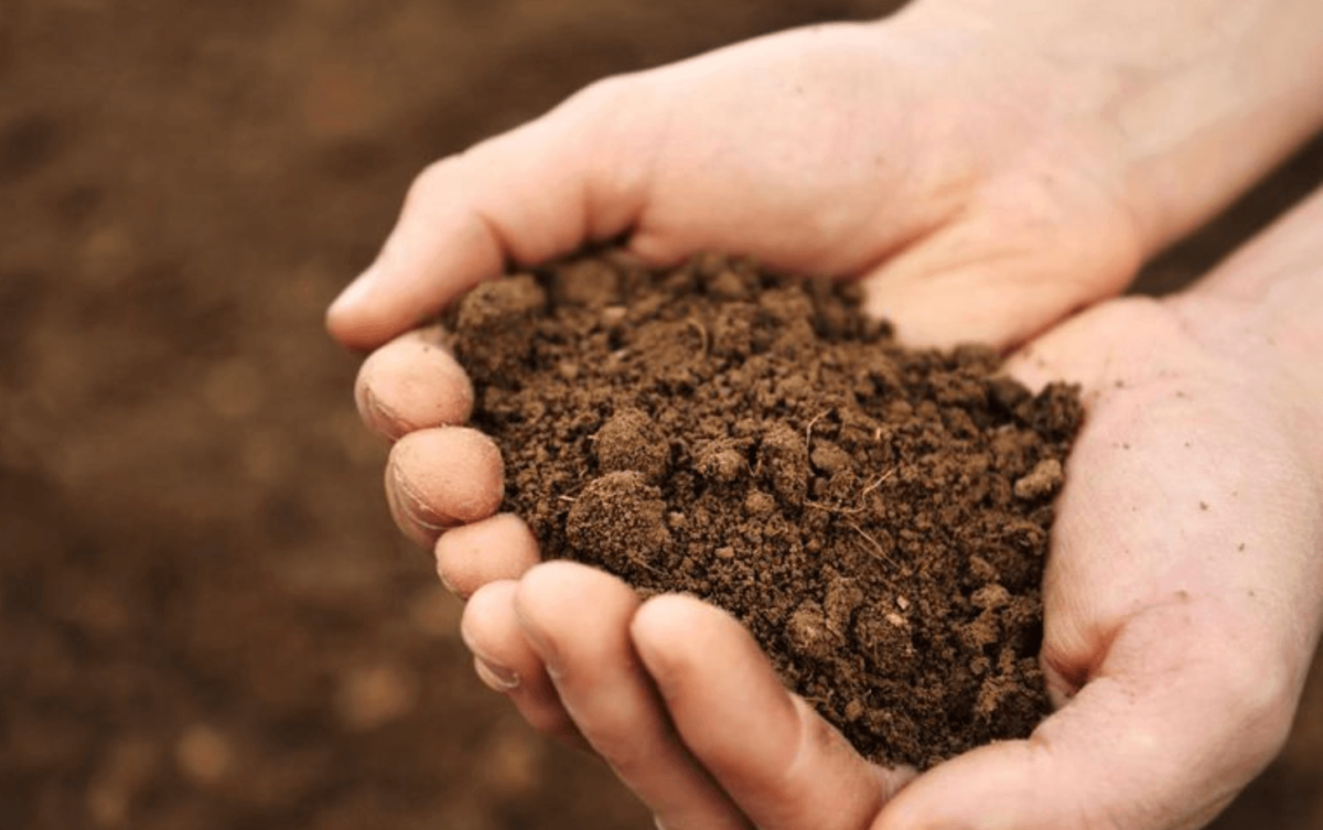 Conditioning sterilised soil
