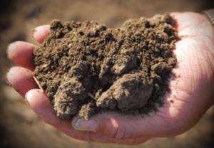 dead-unhealthy-soil