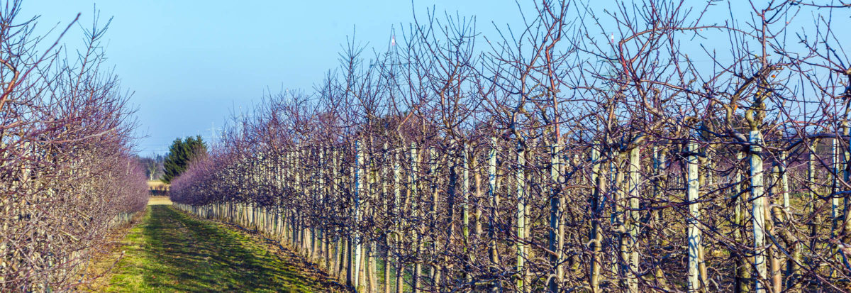 Copper to Aid Defoliation of Vines and Fruit Trees