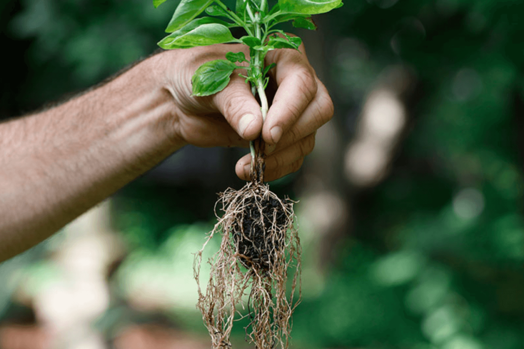 mycorrhizae-roots-soil