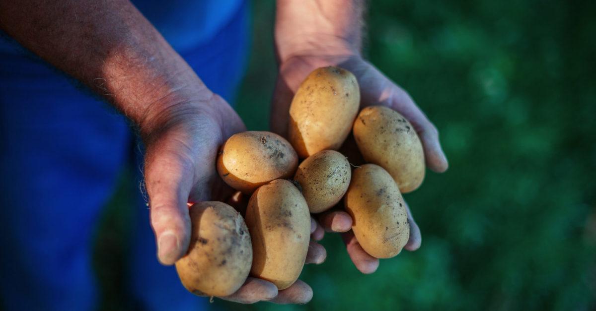 Potatoes fulvic acid
