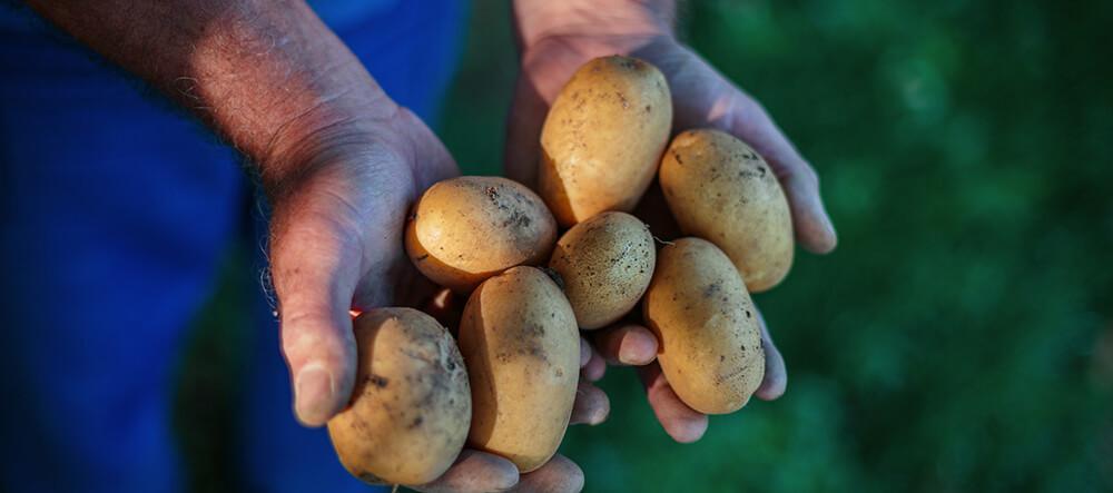 Fulvic Acid Potatoes